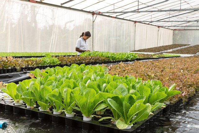 ekologisk odling, mat